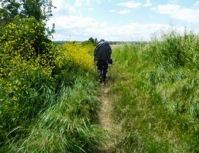 chemin-compostelle-backpacker-homme-marche-herbe