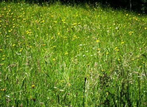 estives-fleurs-herbe