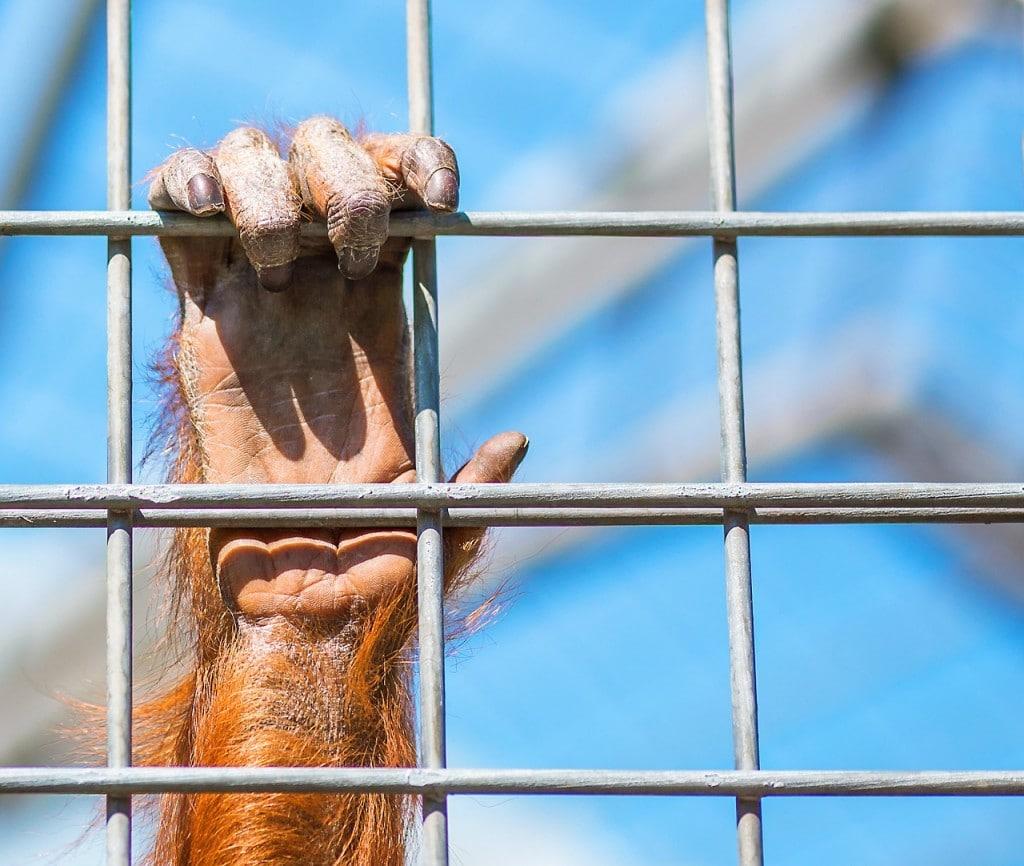 Concilier tourisme et éthique animale