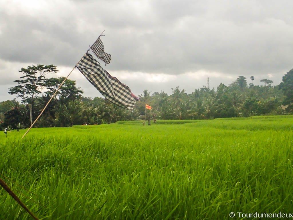 riziere-ubud-bali