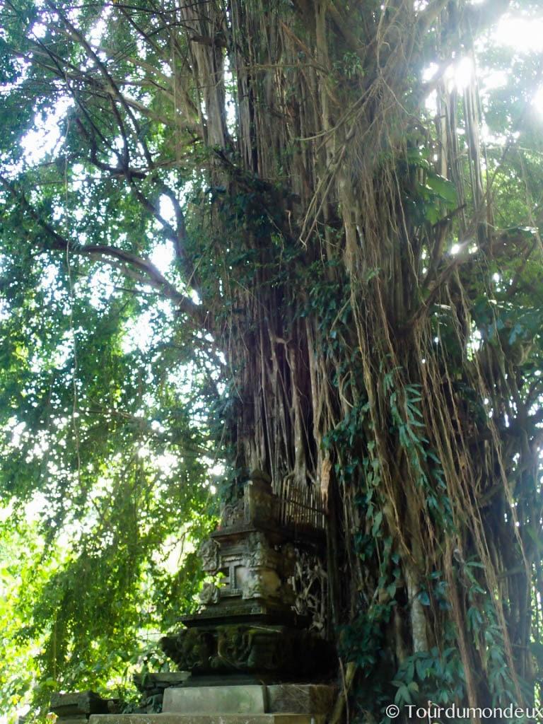 ubud-arbre-bali