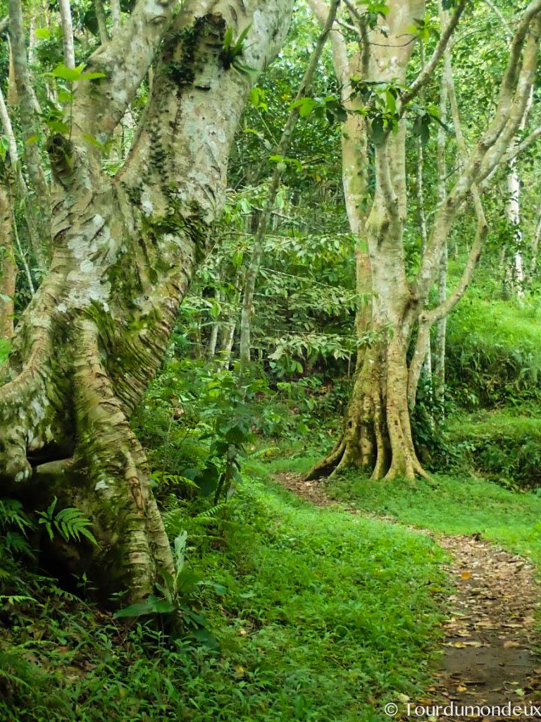 foret-tetebatu-arbre