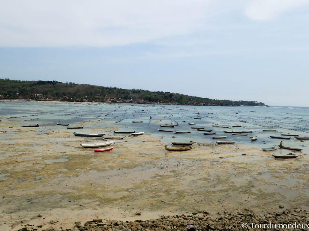 nusa-lembongan-maree-bateau-algues