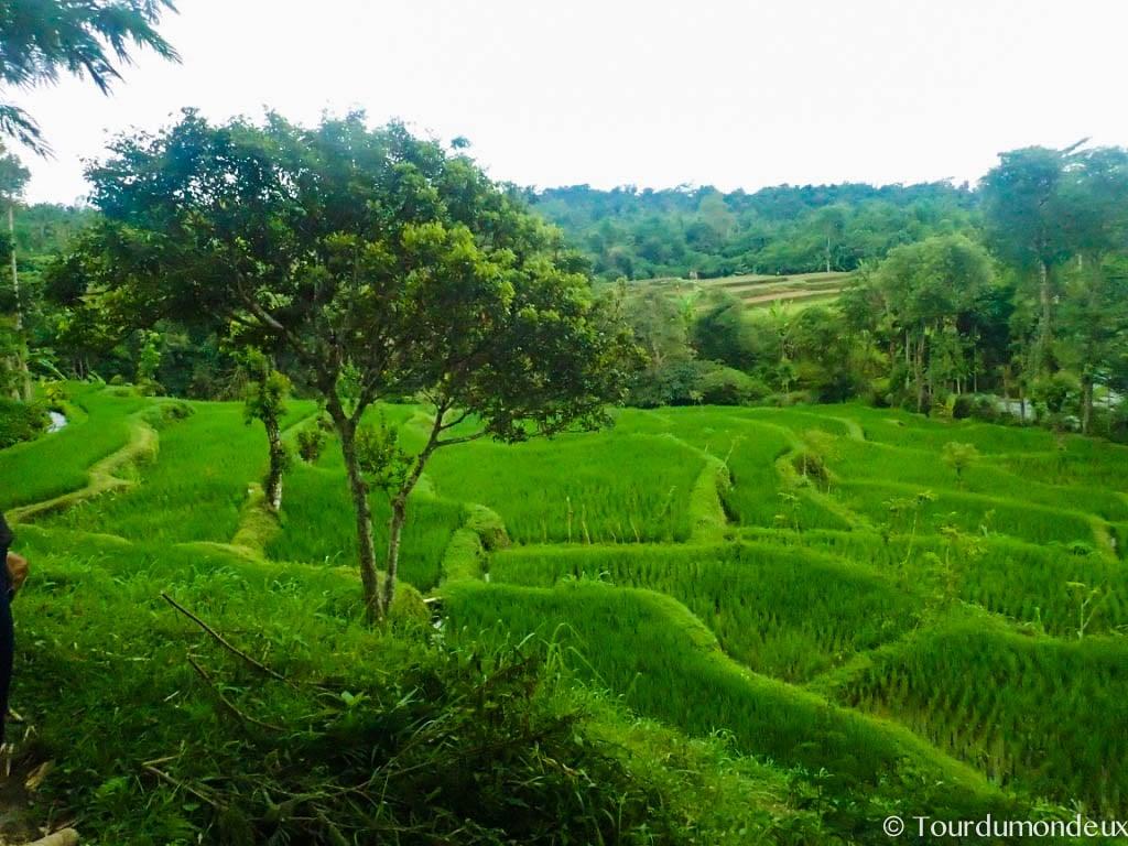 rizieres-arbre-tetebatu-vue