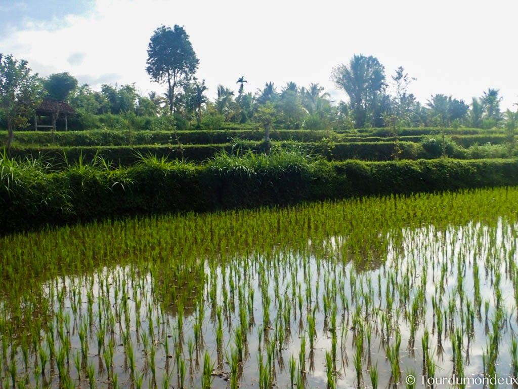 rizieres-tetebatu-lombok