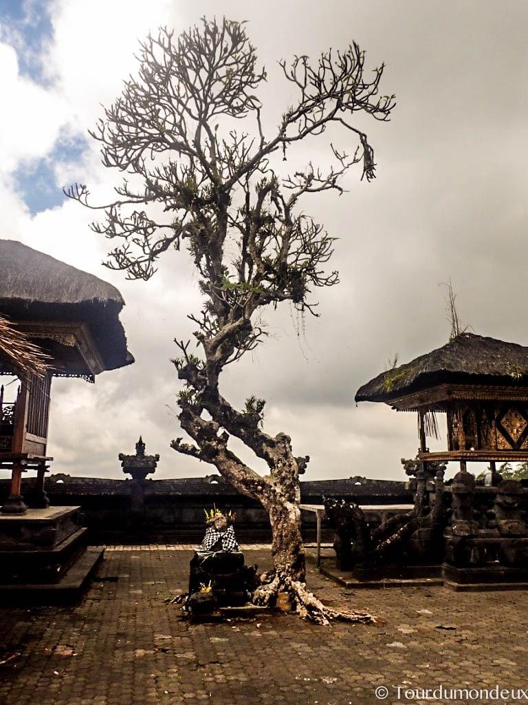 temple-shiva-arbre-bali