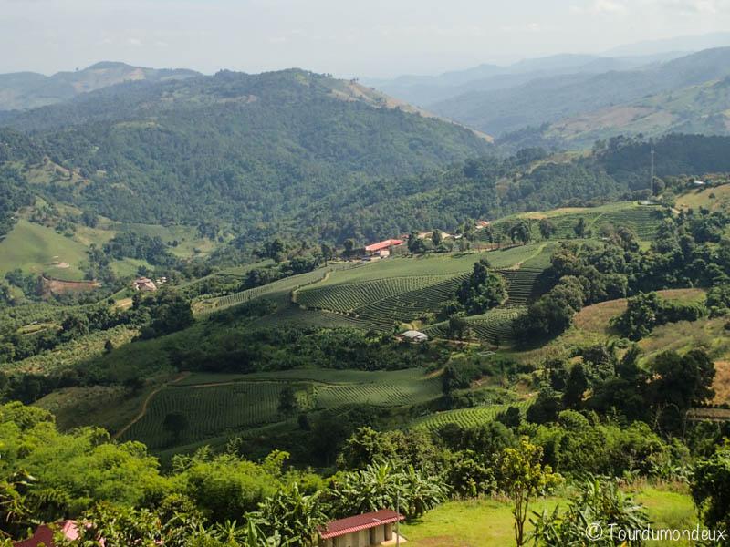plantation-thé-thaïlande-vue