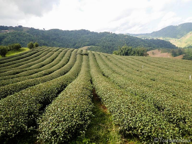 thé-rangée-thaïlande