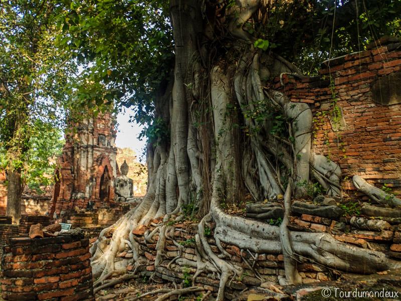 ayuthaya-racines-ruines