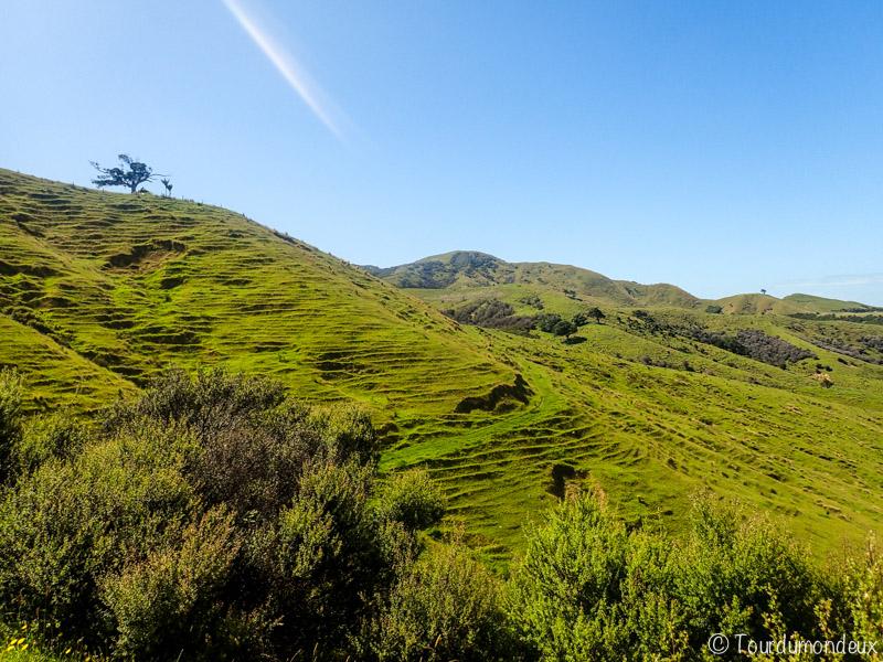 coromandel-vallons-nouvelle-zelande