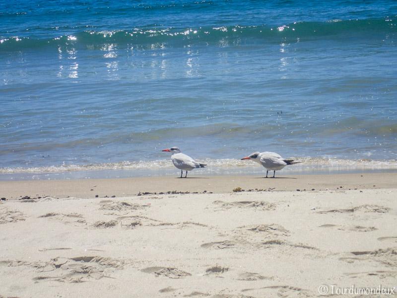 new-chum-oiseaux-nouvelle-zelande