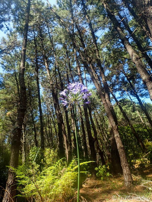 opoutere-fleur-nouvelle-zelande