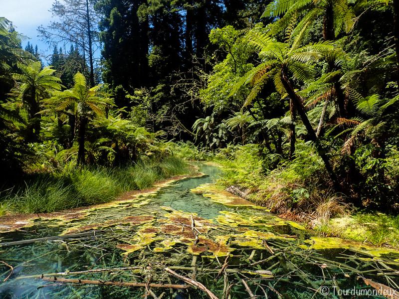 redwoods-eau-nouvelle-zelande