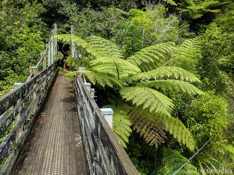 suspension-bridge-loop-nouvelle-zelande