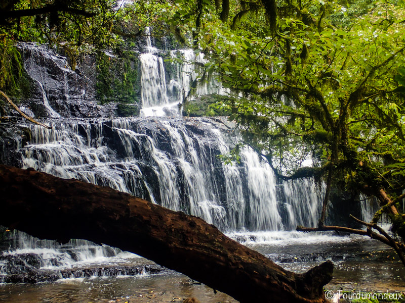 Purakaunui-falls-arbre-nouvelle-zelande