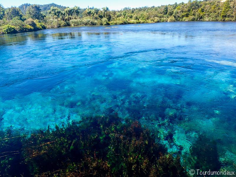 Waikoropupu-springs-bassin-nouvelle-zelande
