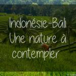 Indonésie – Bali – Une nature à contempler