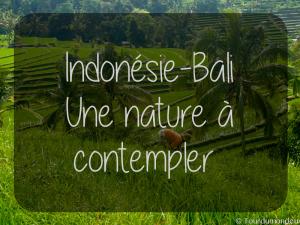 bali-nature-indonésie