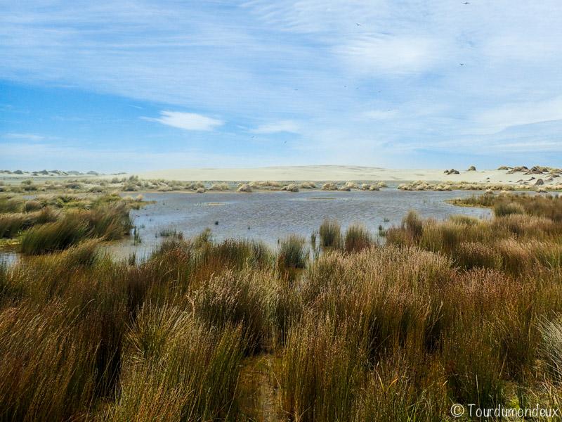 farewell-spit-végétation-nouvelle-zelande