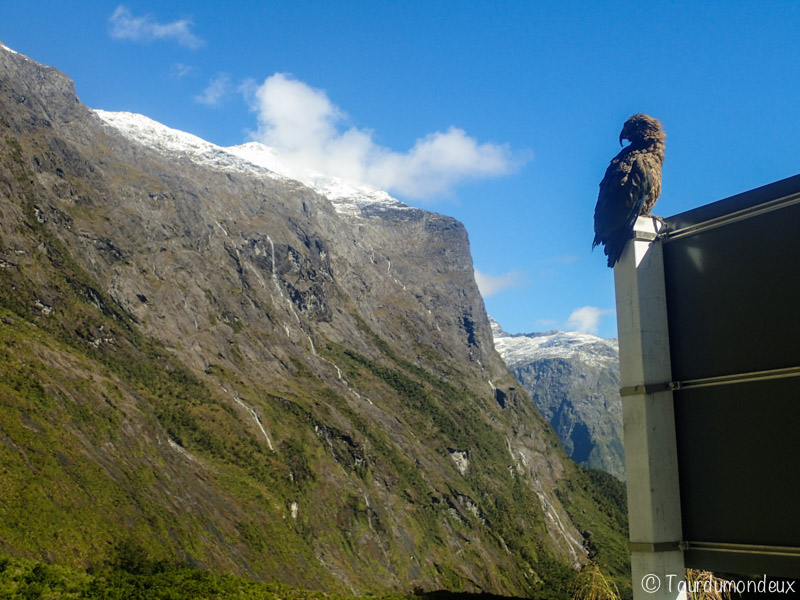 fjords-mea-vue-nouvelle-zelande