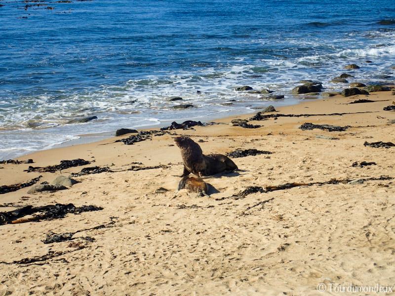 lion-mer-sable-nouvelle-zelande