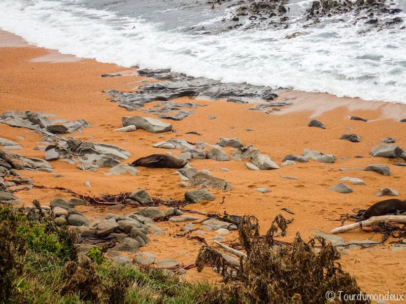 phoque-famille-nouvelle-zelande