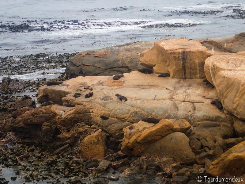 phoques-falaises-nouvelle-zelande
