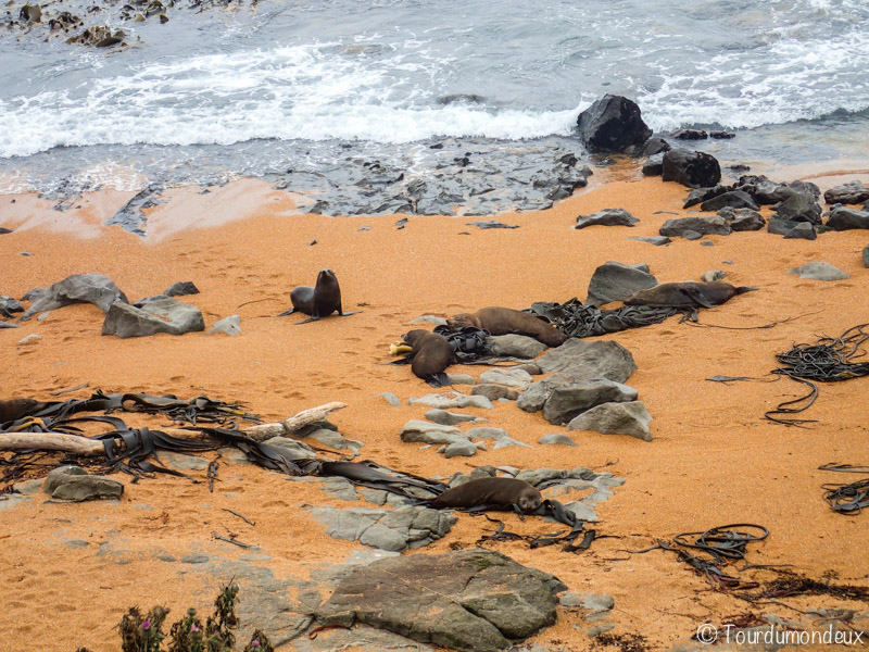 phoques-plage-nouvelle-zelande