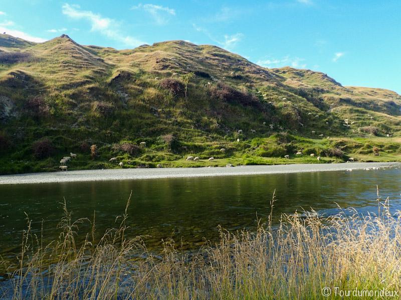 ruisseau-moutons-nouvelle-zelande