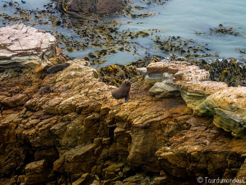 shag-point-phoques-nouvelle-zelande