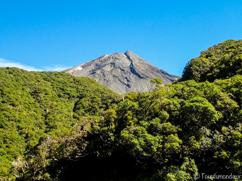 taranaki-forêt-nouvelle-zelande