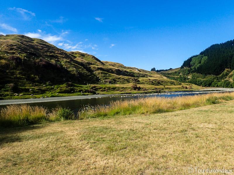 vallons-moutons-nouvelle-zelande
