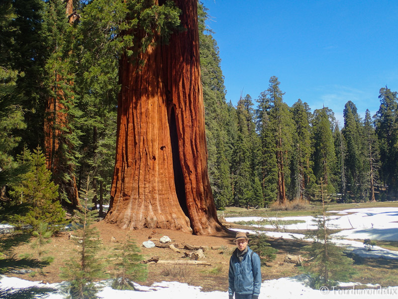 big-tree-trail-tourdumondeux-californie
