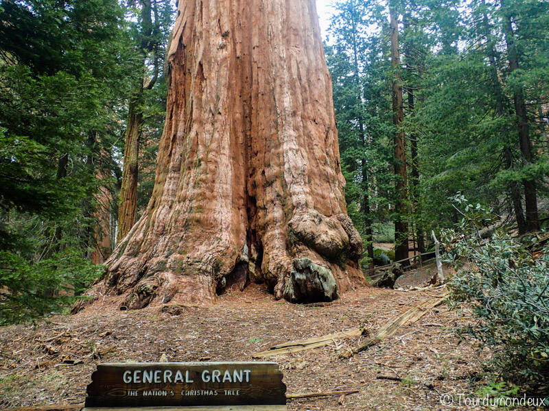 general-grant-tree-californie