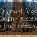 Californie: Sequoia et Kings Canyon – au coeur de forêts millénaires