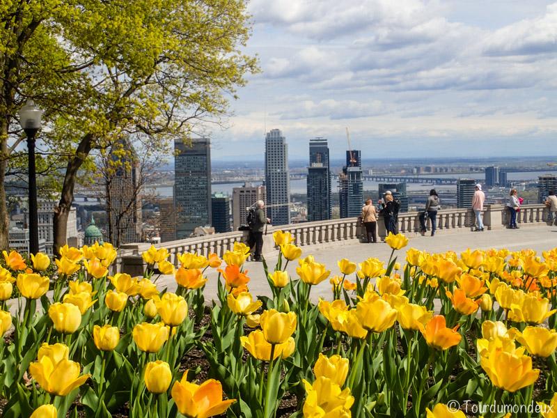mont-royal-fleurs-montreal