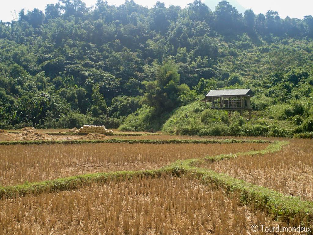 rizieres-coupees-laos