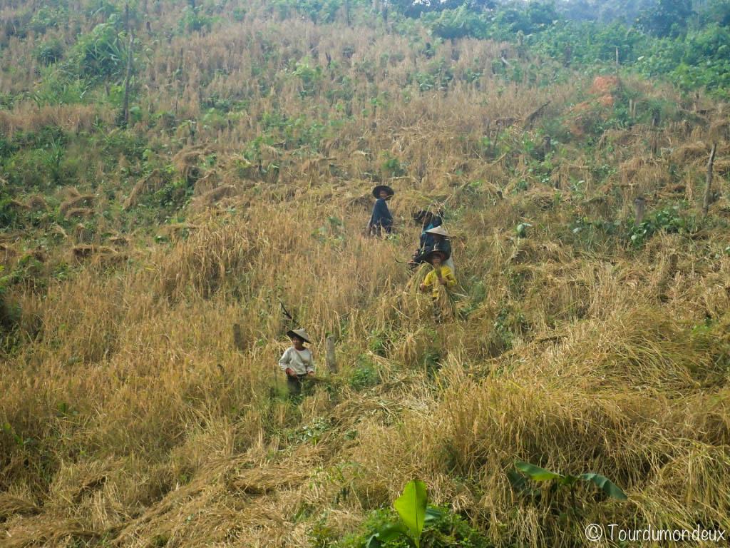riziculteurs-laos-coline