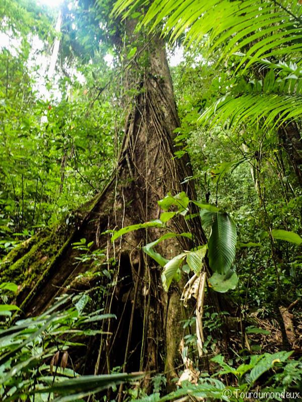 arbre-jungle-laos