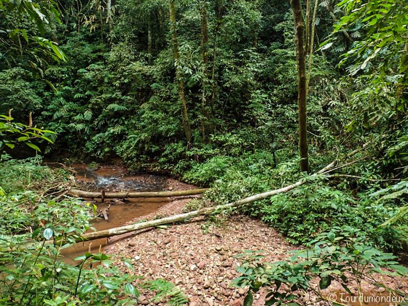 ruisseau-jungle-laos